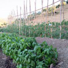 Agriturismo Cefalù Madonie_Vegetable garden