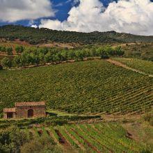 Luxury winery resort Castelbuono_vineyards