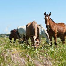 Country Hotel Otranto_horses