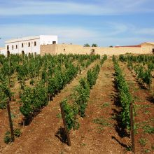 Winery resort Marsala