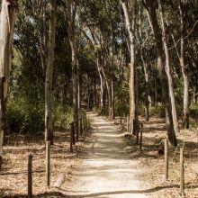 Residence Eraclea Minoa_pine wood