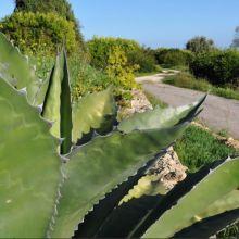Agriturismo Siracusa_garden