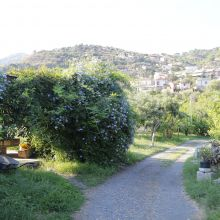 Rural B&B Sicily east coast - garden