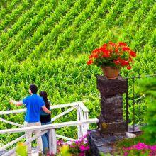 Wine resort Etna East_view